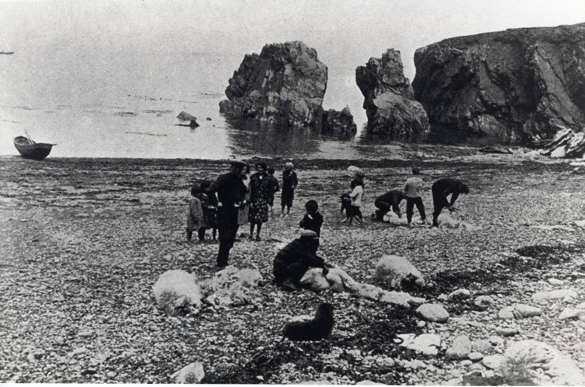 Shearing sheep in a natural pen formed by one of the coves on Blasket.